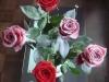 Розы с белым флоком
